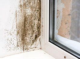 Schimmelbefall in der Fensterlaibung